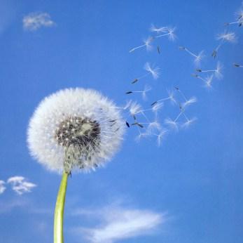 12 Ways of Letting Go